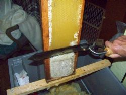 Uncapping The Honey.